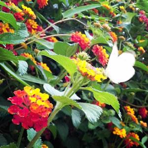 ASIMOV - Flowers